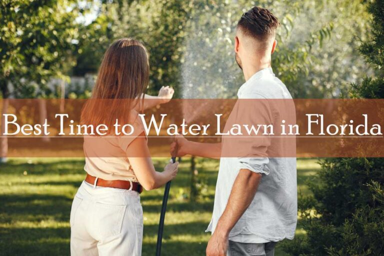 Best time to water the lawn in Florida